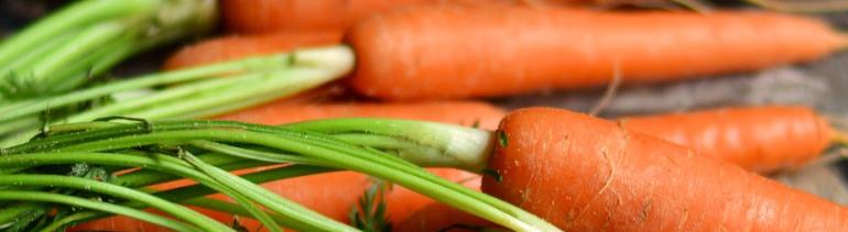 Frescas zanahorias